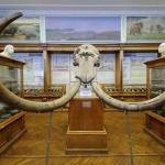 Землеведения МГУ, музей